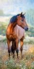 PLÁŽOVÁ OSUŠKA HORSE KŮŇ NA LOUCE
